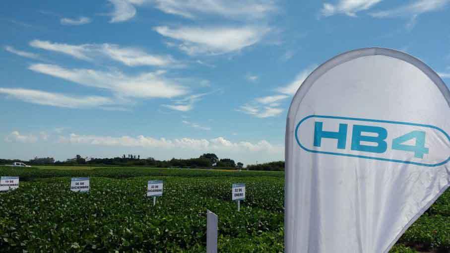 Canadá aprueba la soja HB4 tolerante a estrés hídrico desarrollada por la argentina Bioceres