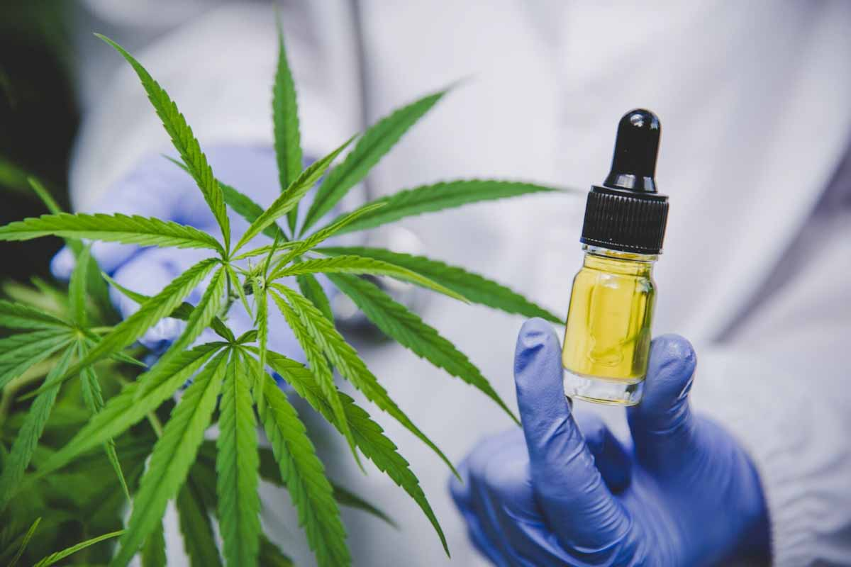 CBD cannabis cosmetica belleza