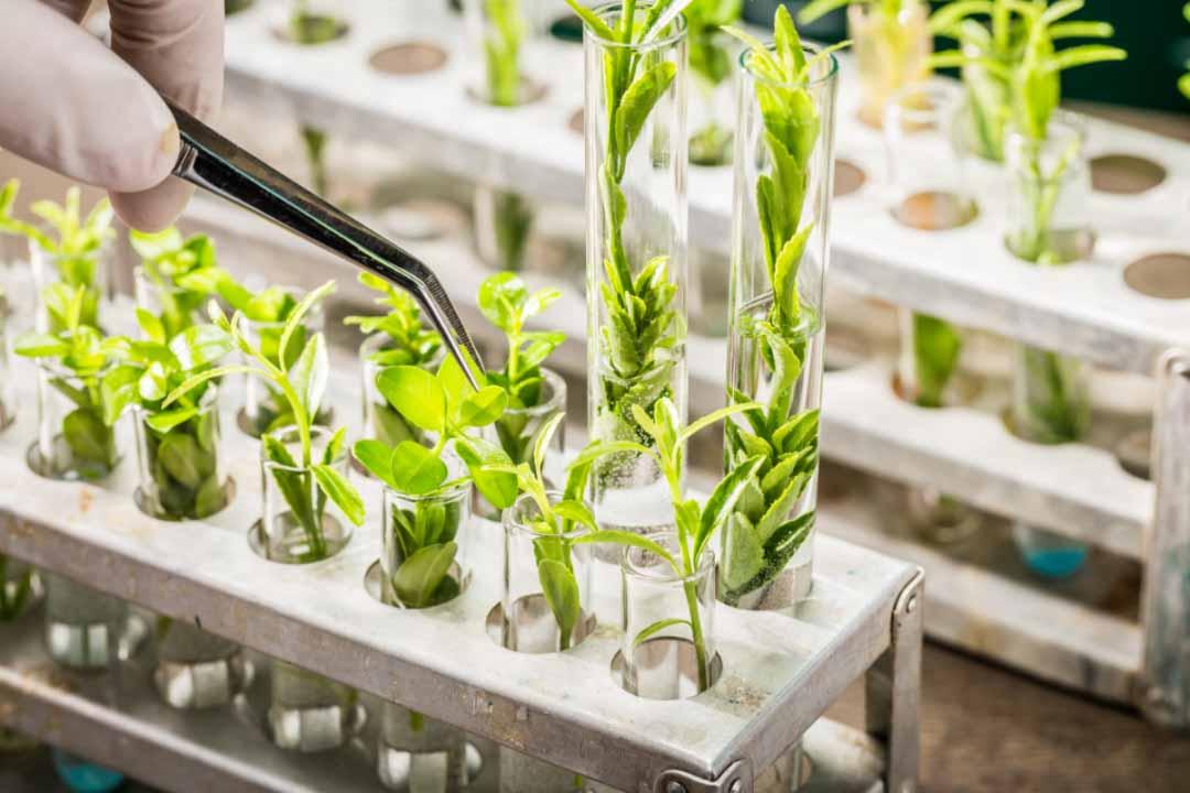 reproduccion-plantas-biotecnologia