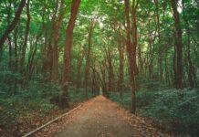 Helm Argentina y TGA Company unidos para colaborar con la forestación y sustentabilidad ambiental