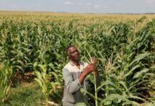 África elabora las directrices para cultivos transgénicos