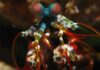 Biomimética inspirados en los apéndices del camarón mantis científicos crean un nuevo biomaterial ultraresistente ideal para implantes dentales