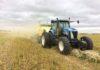 CIHC: la compañía canadiense que quiere revolucionar la bioeconomía con los residuos del cultivo de cáñamo