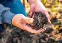 Cargill ofrece una nueva fuente de ingresos a los agricultores que adopten prácticas de agricultura regenerativa
