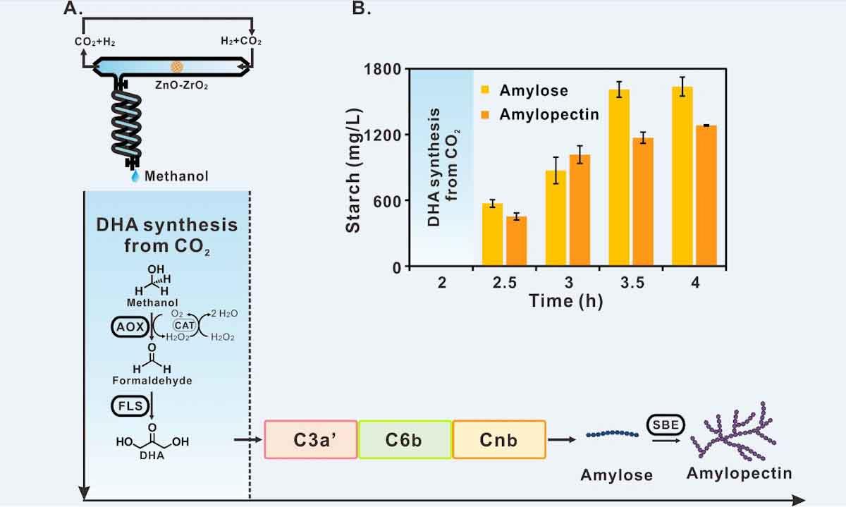 ¿Adiós a los cereales? Científicos chinos logran producir almidón a partir de CO2, pero sin fotosíntesis ni plantas_edited