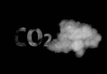 Con bacterías de E coli modificadas convierten el CO2 del aire en carbohidratos, ácido fórmico y combustibles renovables