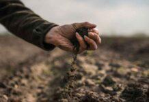 En antesala de Cumbre de Sistemas Alimentarios, gobiernos de las Américas y sector privado afirman que sólo suelos saludables permitirán una agricultura más sostenible