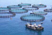 """""""La acuicultura es el sector agroalimentario de más rápido crecimiento a nivel mundial"""""""