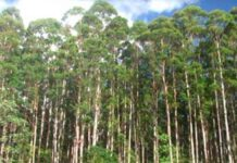 La cadena forestal argentina presentó al gobierno su aporte para hacer frente al Cambio Climático