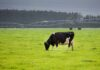 Nueva Zelanda prueba tres nuevas sistemas de producción láctea para ser la actividad más sostenible