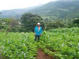 La Unión Europea y el IICA suman esfuerzos para minimizar inseguridad alimentaria y nutricional de 1 508 familias del Trifinio en Centroamérica