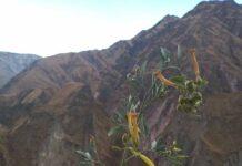 Una 'caminata' por los senderos de la bioeconomía ancestral